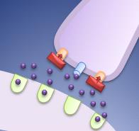 抗うつ薬の作用